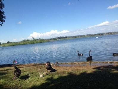 lake-wendouree